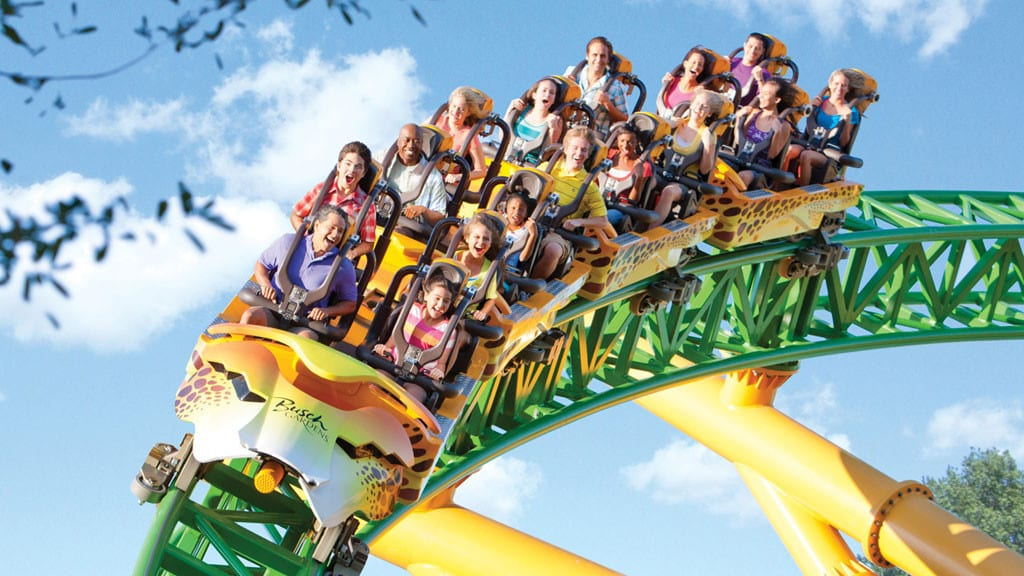 Cheetah-Hunt-Busch-Gardens-Tampa24