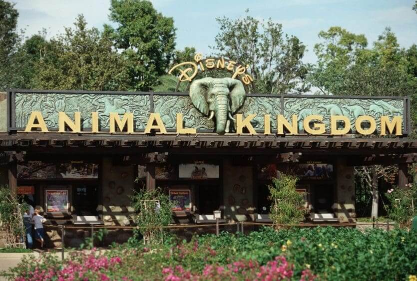 Shows, paradas e apresentações no parque Disney Animal Kingdom Orlando