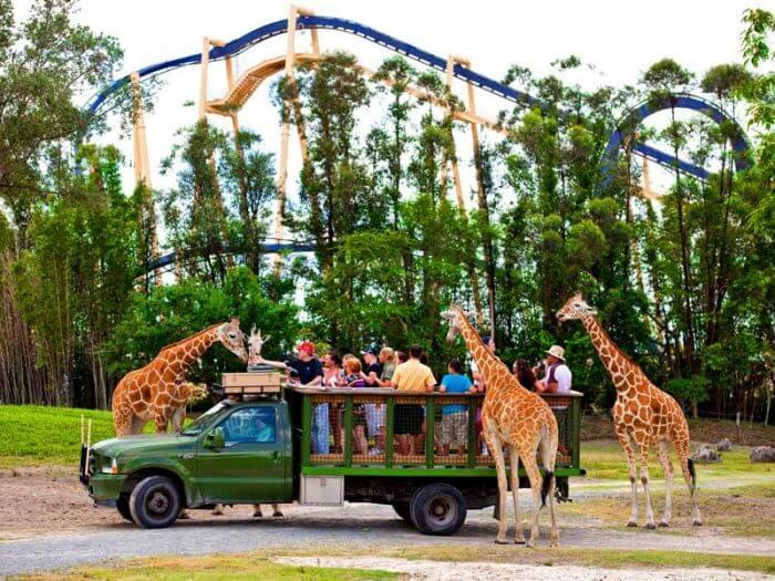 Vida selvagem no Parque Busch Gardens Orlando