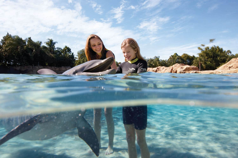 Nadar com golfinhos no Discovery Cove Orlando