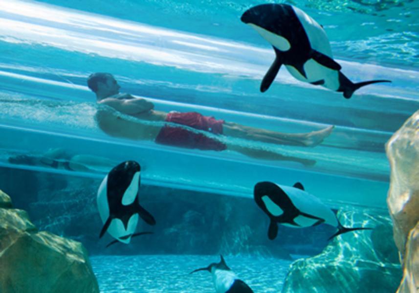 Atrações do Parque Aquatica Orlando