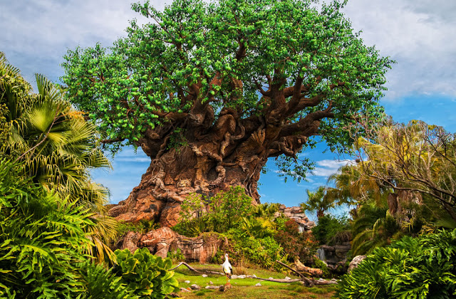Parque Animal Kingdom da Disney Orlando