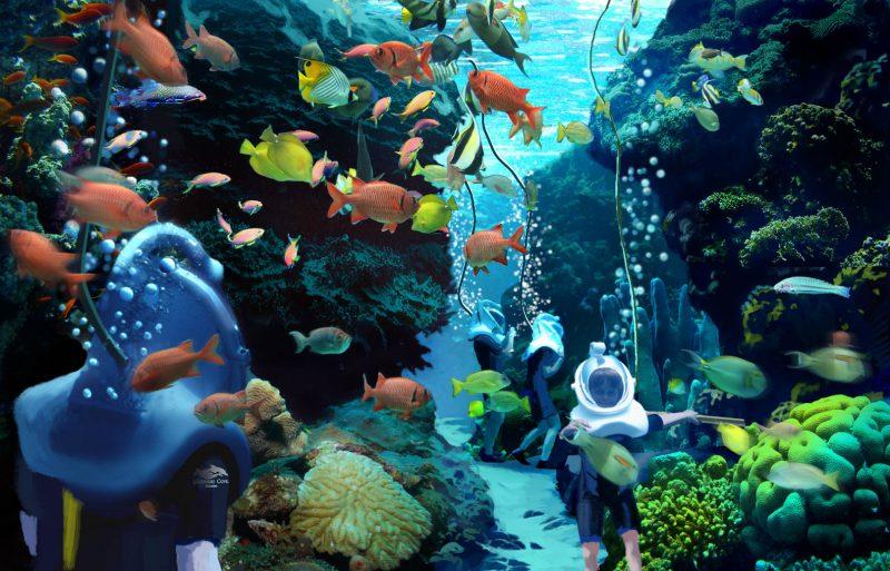 7 lugares para se refrescar em Orlando: Parque Discovery Cove