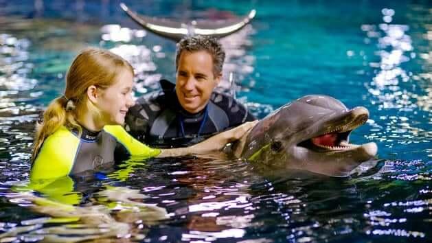 dolphins-in-depth-disney