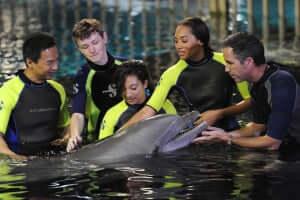 dolphins-in-depth-na-disney