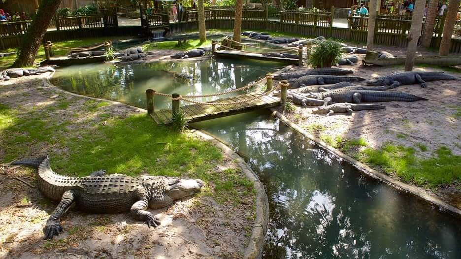 Alligator Farm em Saint Augustine