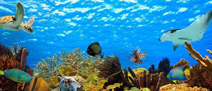 Seas Aqua Tour na Disney em Orlando: coral caribenho