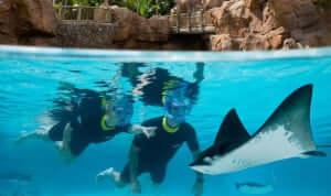 Roteiro 9 dias em Orlando: Discovery Cove