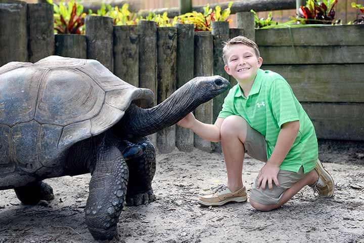 Pontos Turísticos em Tampa: Zoológico Lowry Park
