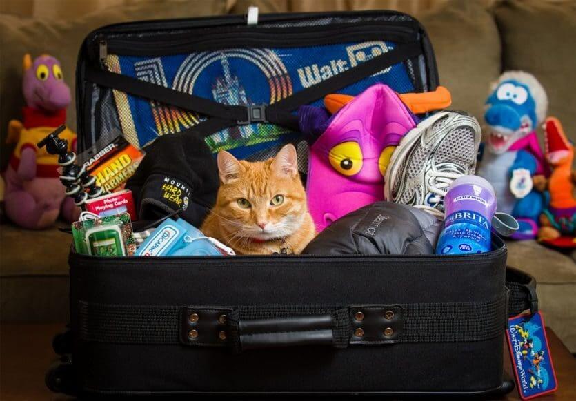 10 dicas para ir à Disney e Orlando com crianças: bolsa equipada