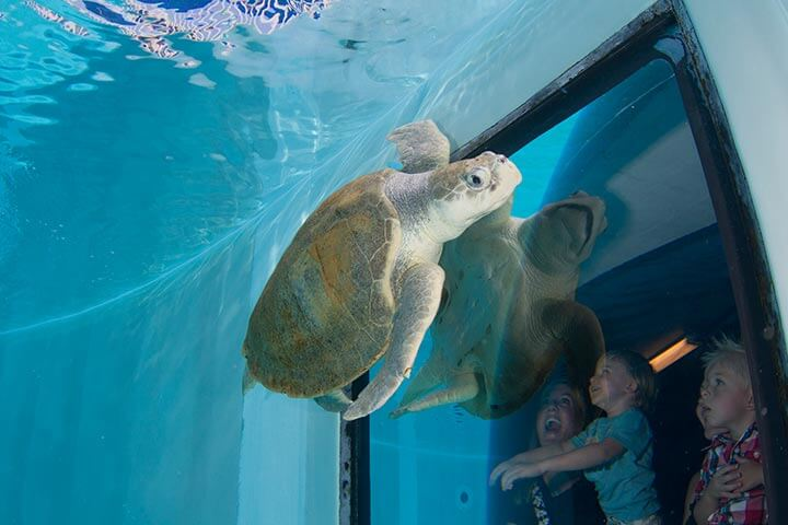 Pontos Turísticos em Tampa: Florida Aquarium