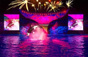 Orlando e Disney no mês de Julho: Summer Nights no SeaWorld