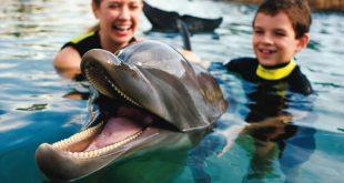Onde nadar com golfinhos em Orlando