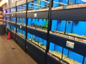 Pet shop Petco em Orlando: aquários