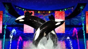 Summer Nights do Parque SeaWorld Orlando