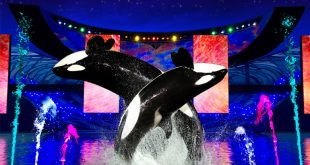 Summer Nights do Parque SeaWorld Orlando