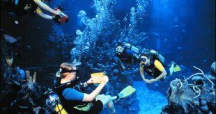 Mergulho no Epcot na Disney Orlando 3