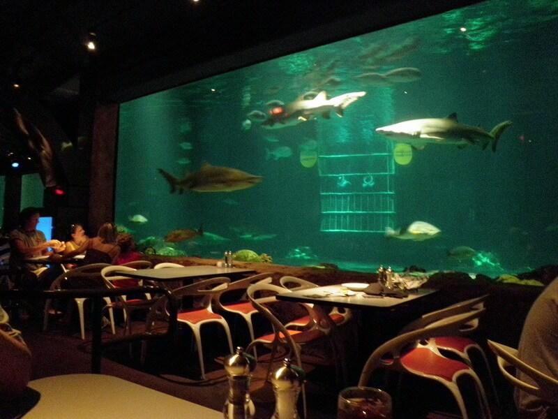 Restaurante Sharks Underwater Grill do SeaWorld Orlando: aquário