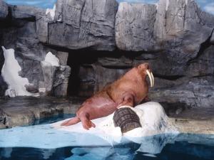 7 atrações e brinquedos do Parque Seaworld em Orlando