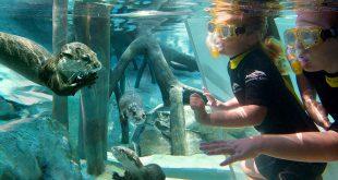 Como passar um dia no parque Discovery Cove em Orlando