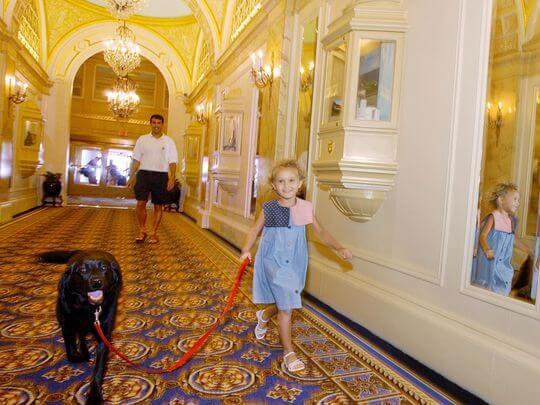 hotel-cachorro-disney-orlando