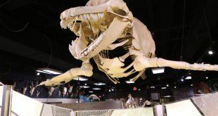 museu-skeletons